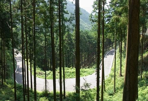 林道白岩柿平線-白岩側途中
