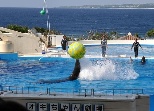 美ら海水族館5