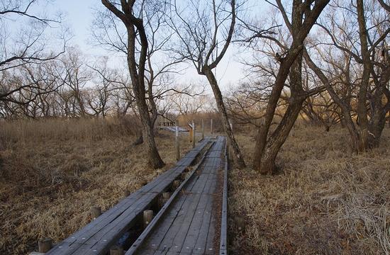 多田木山-遊歩道