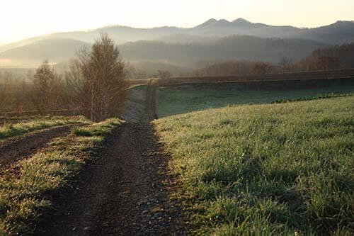 朝露の小道