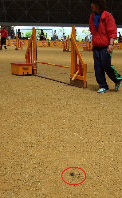 10-2010_06170017.jpg