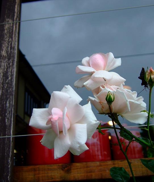 10-2010_07020028.jpg