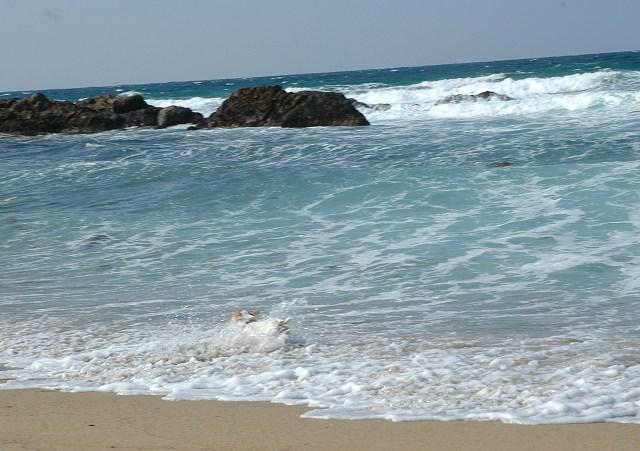 11-2011_03070095.jpg