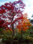 秋の庭H211112