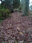 落ち葉の小道H211204