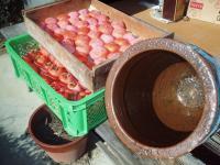 柿酢つくり-柿と瓶の日光消毒H211208