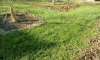 畑の落ち葉掃除H211210