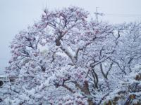 雪のサンシュウH211217