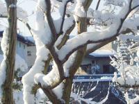 雪H220202.jpg