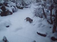 雪の中でゴンベエH220212.jpg