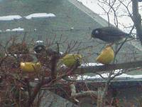 鳥の嗜好の実験H220216.jpg
