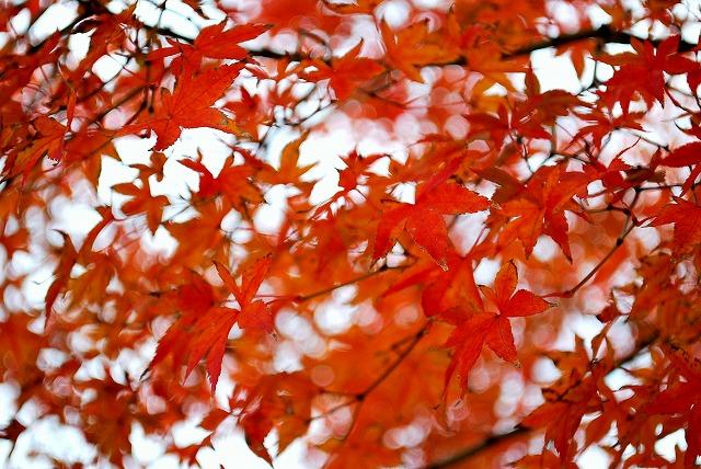 紅葉その2
