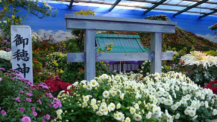 にいがた 弥彦神社 菊花展