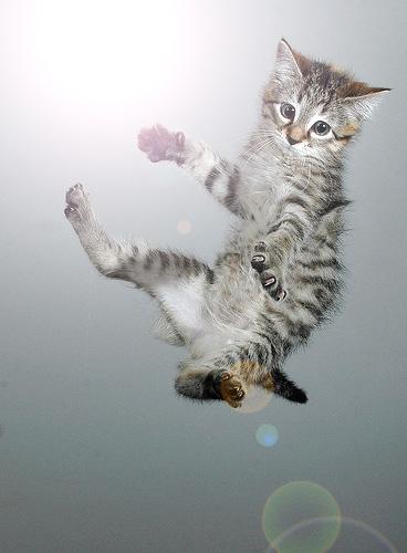 FallingCat
