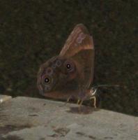 勝尾寺の蝶