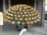湯島天神菊祭2