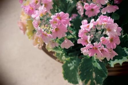 お庭 (4)