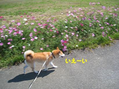 IMG_9322-2.jpg