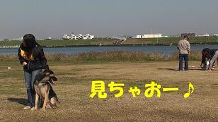 1_20101128190950.jpg