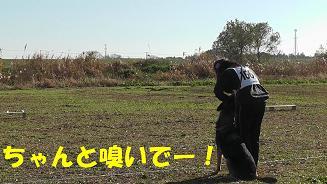 1_20101205211824.jpg