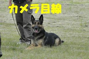 17_sh01