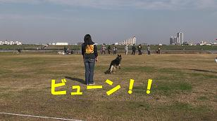 4_20101129123703.jpg