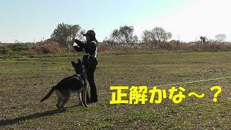 4_20101205211823.jpg
