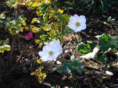 石窯ガーデンテラス花3