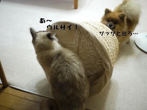 1009113.jpg