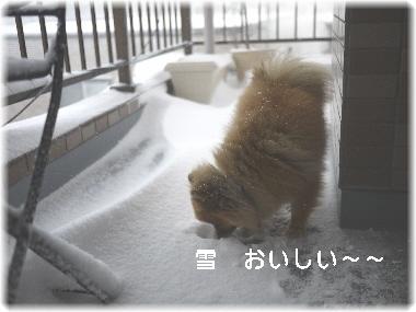 雪 美味しい~