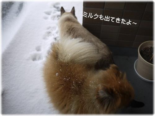 ミルク雪の中へ