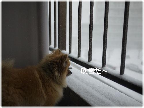 吹雪の中01