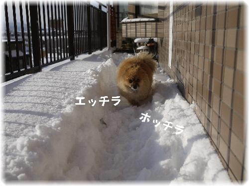 雪を越えて