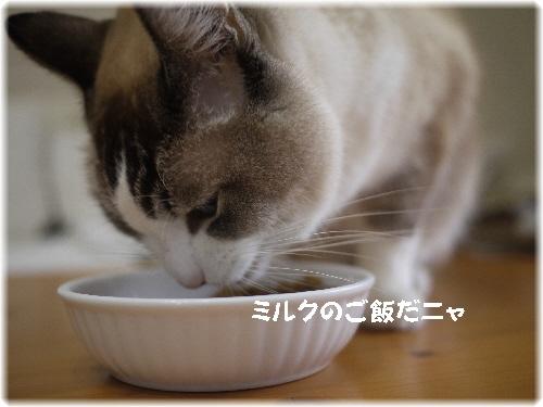 ミルクのご飯