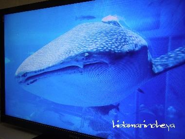 3Dテレビ2