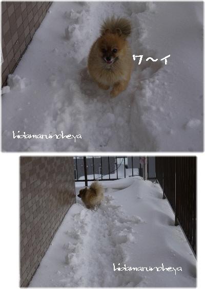 連結画像-雪だワ~イ