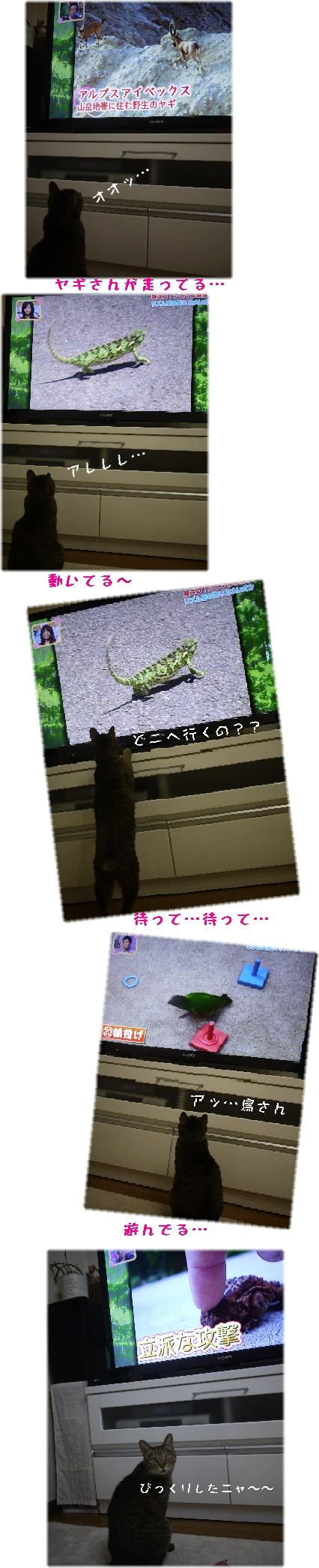 テレビを見るハナ①