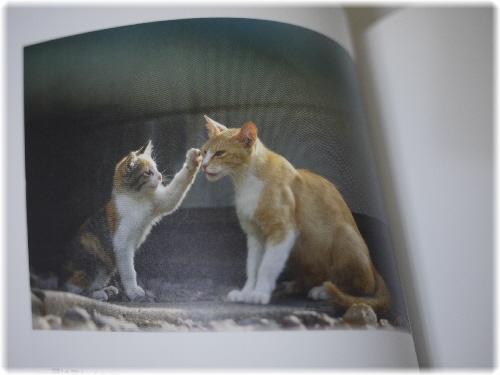 野良猫110534