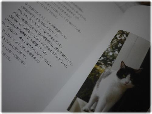 野良猫1105133