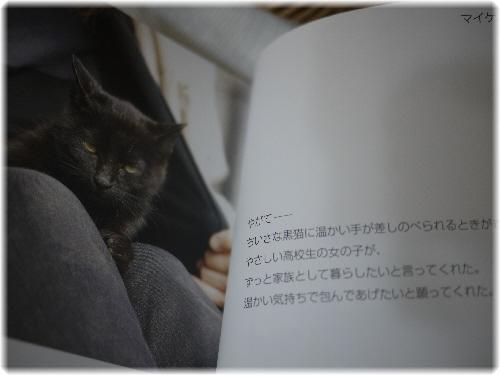 野良猫1105131