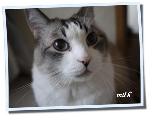 milk1104064.jpg
