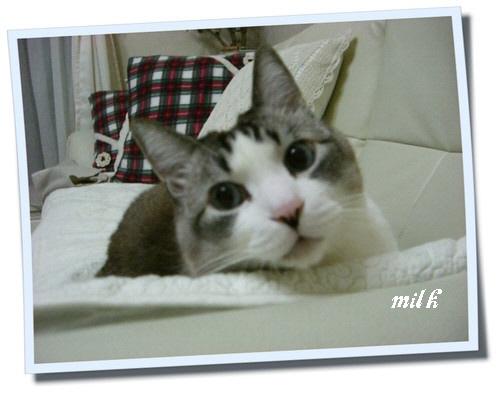 milk1104080.jpg
