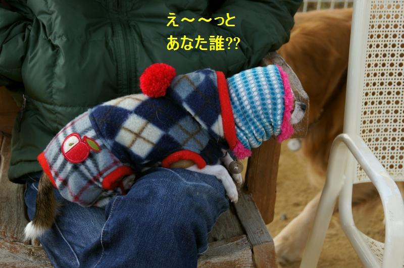 10_20120110082349.jpg
