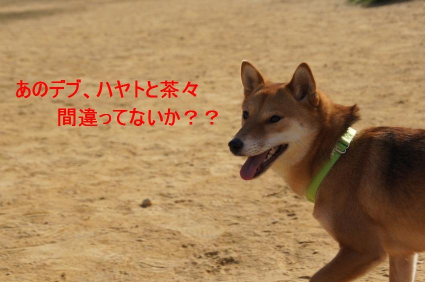 11_20111221131052.jpg