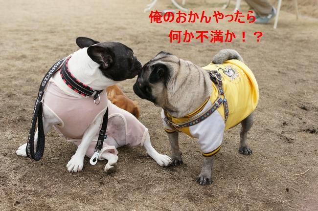 11_20120201105141.jpg