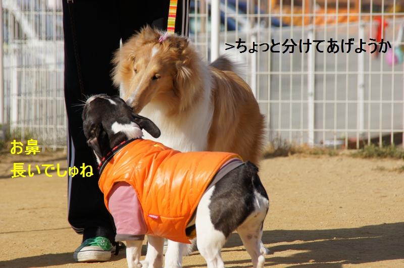 12_20120110082346.jpg
