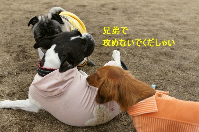 12_20120201105140.jpg