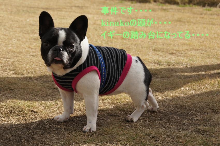 14_20111212195122.jpg