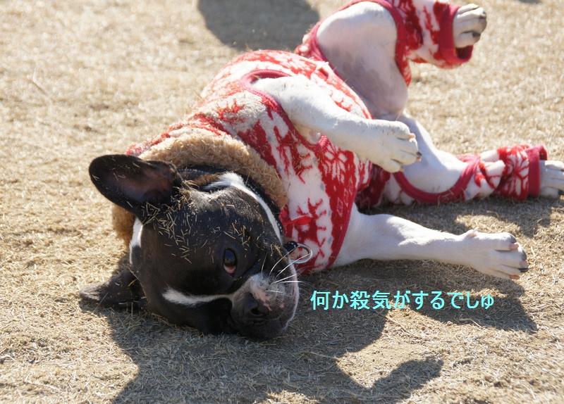 15_20111229085342.jpg