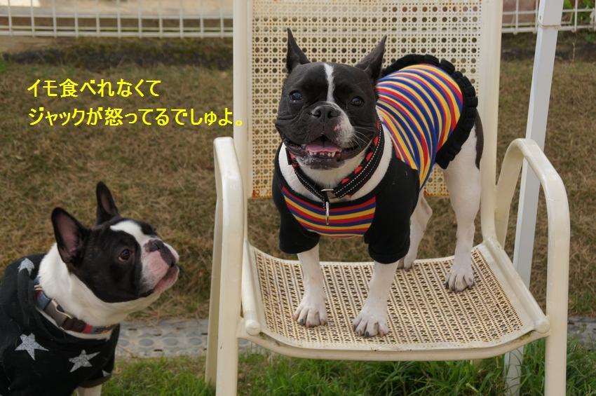 16_20111212195740.jpg
